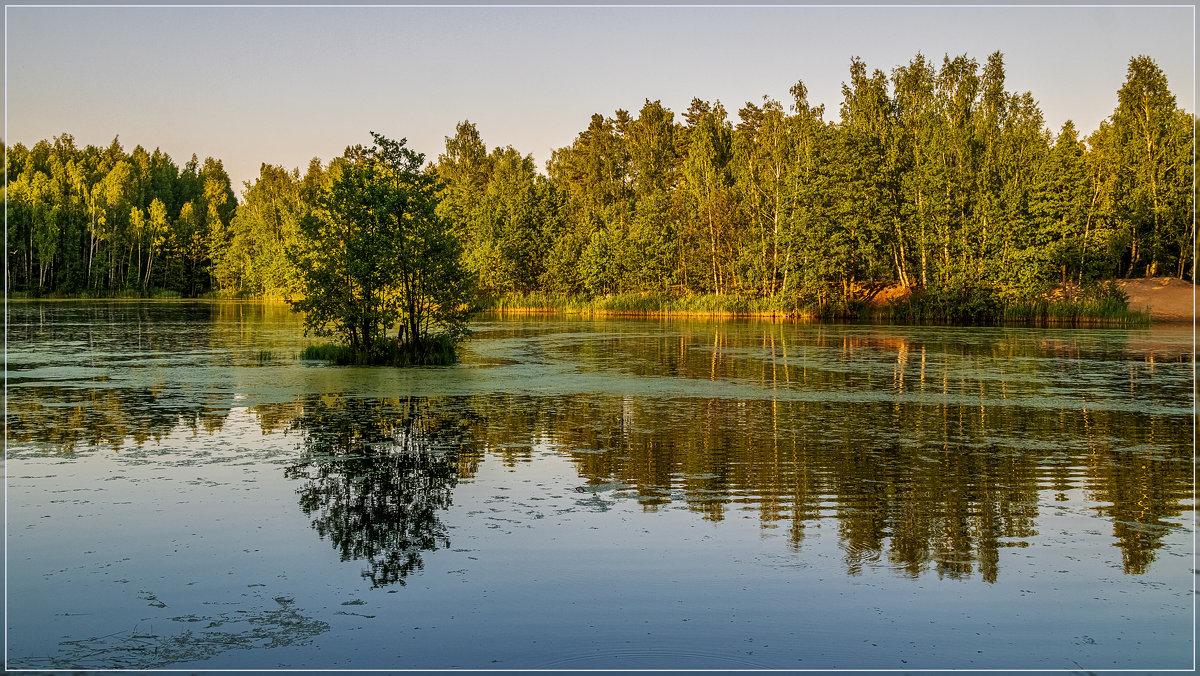 Озеро в лесу - Андрей Дворников