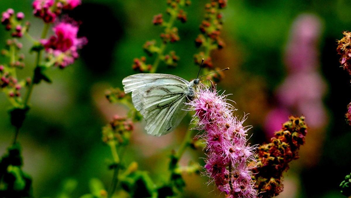 и снова они - цветы с крыльями 2 - Александр Прокудин
