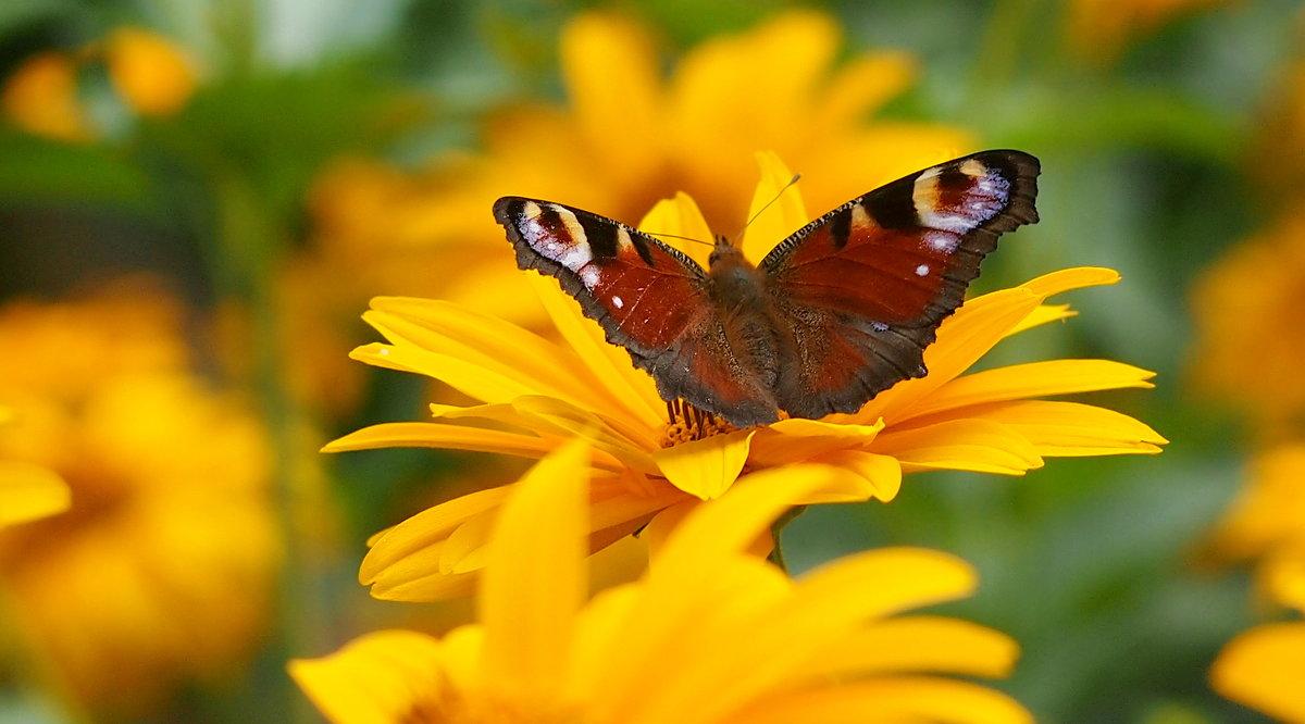 и снова они - цветы с крыльями 4 - Александр Прокудин