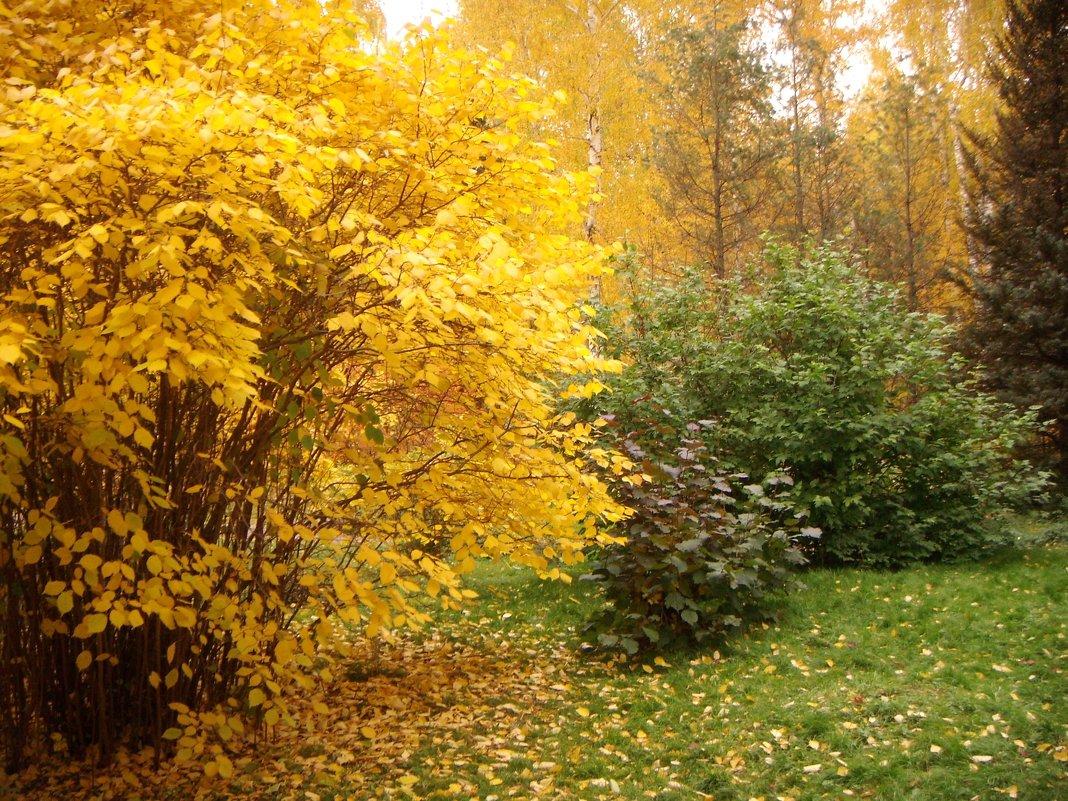 Осень. - Ольга