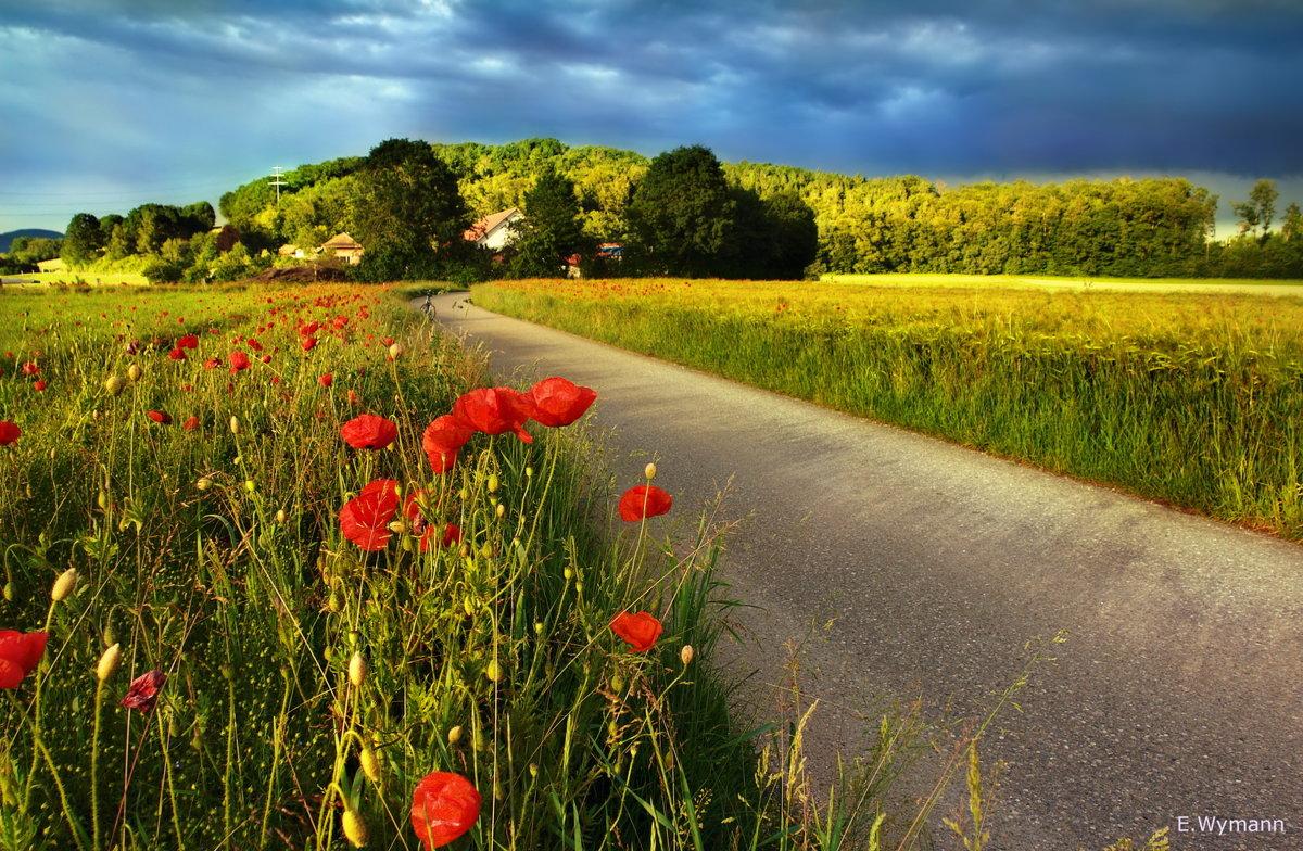 прекрасен лес и поле, и цветы... - Elena Wymann