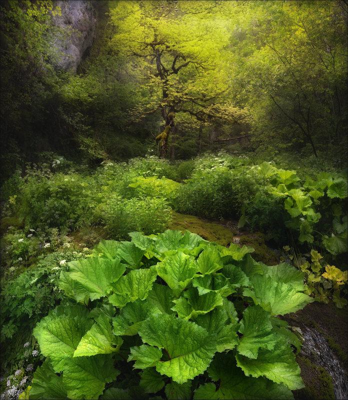 Эльфийский лес .. - Влад Соколовский