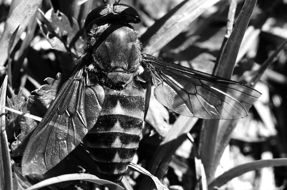 Смерть насекомого - Екатерина