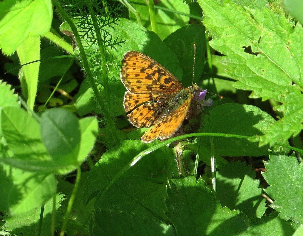 Бабочка - Вера Щукина