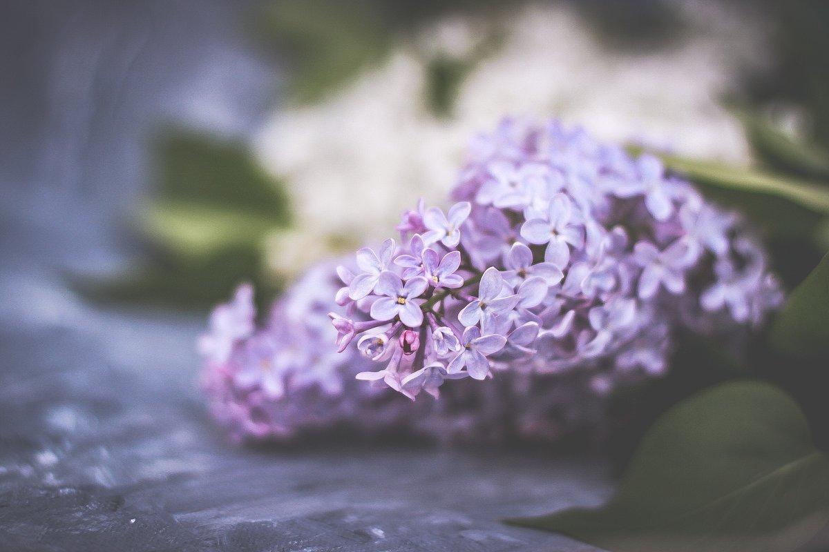 lilac - Татьяна Зубрицкая