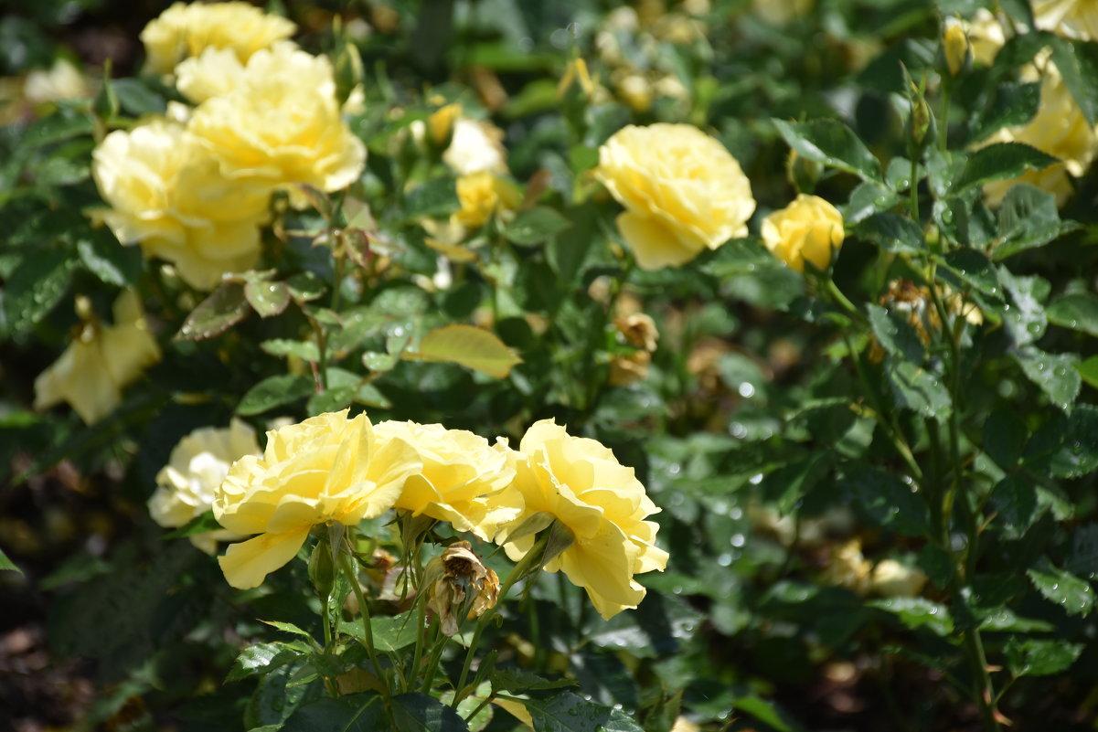 flower - Jerzy Hermanowicz