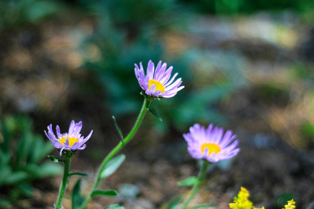 цветы - Руслан А