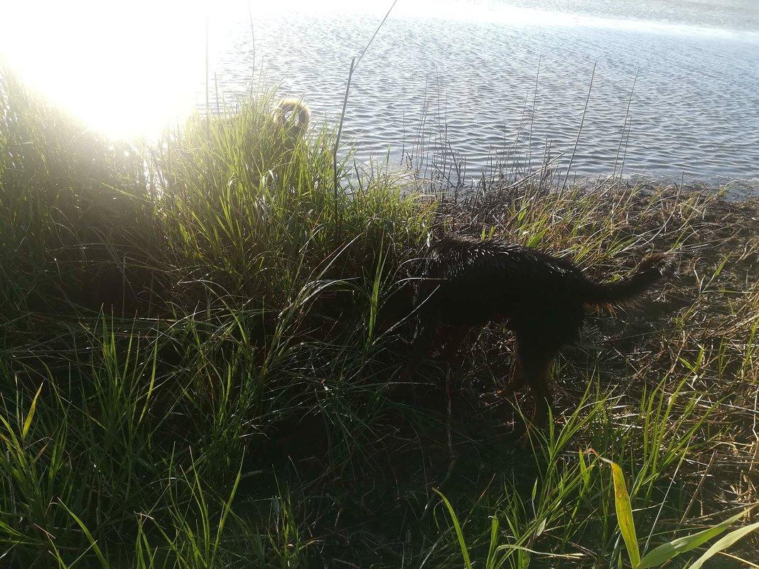 Прогулка на закате - ТАМАРА