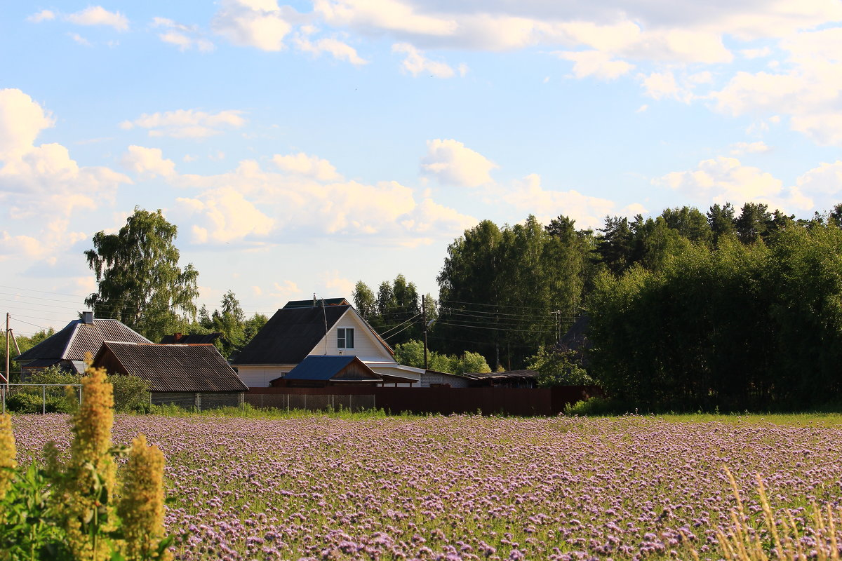Июнь в деревне - Татьяна Ломтева