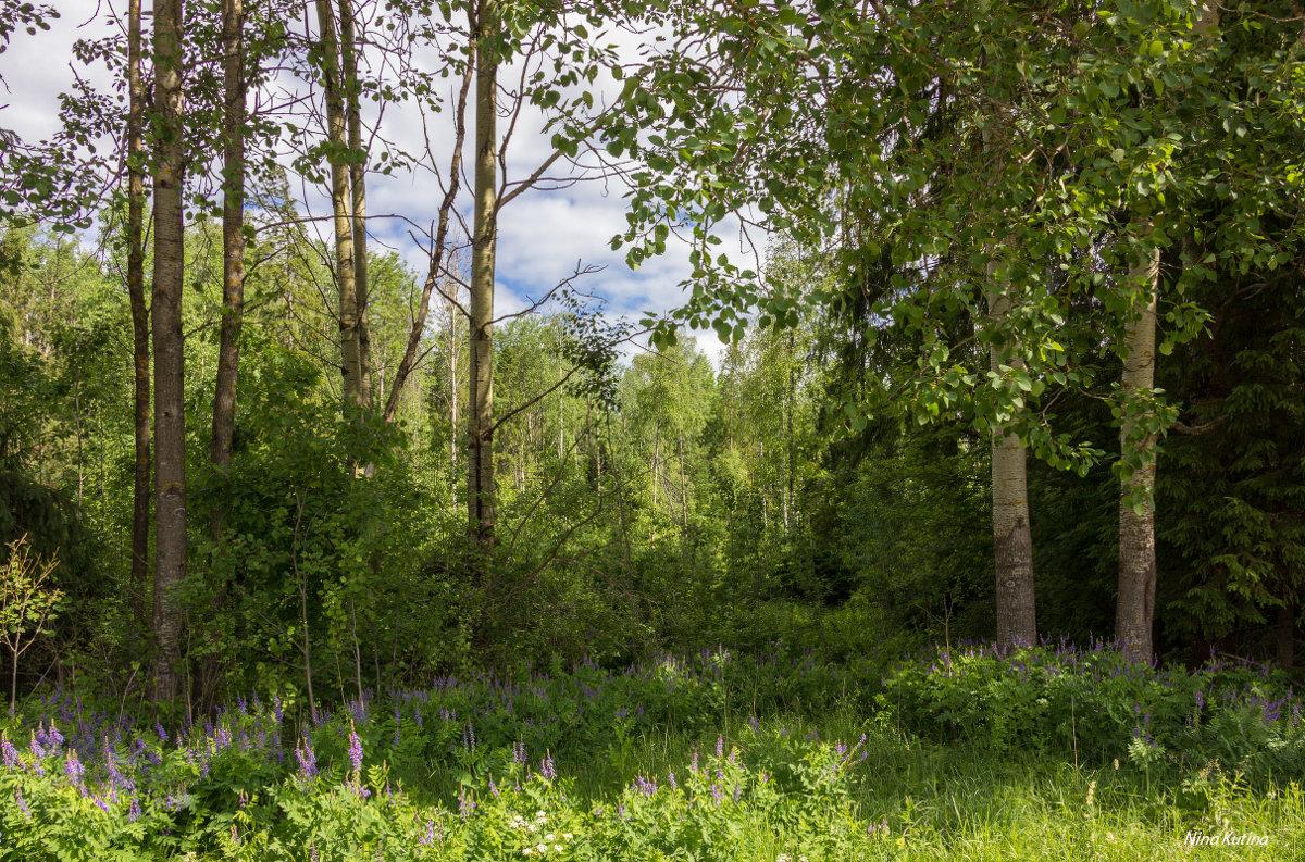 У опушки леса - Нина Кутина