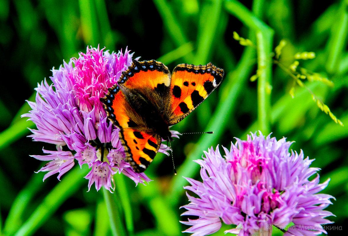 Бабочки летают, бабочки... - Елена Митряйкина