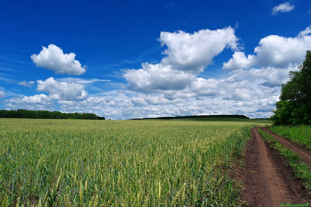 Жизнь подобна полю, где мы должны собрать то, что мы выращиваем, сорняки  или пшеницу.. - Андрей Заломленков