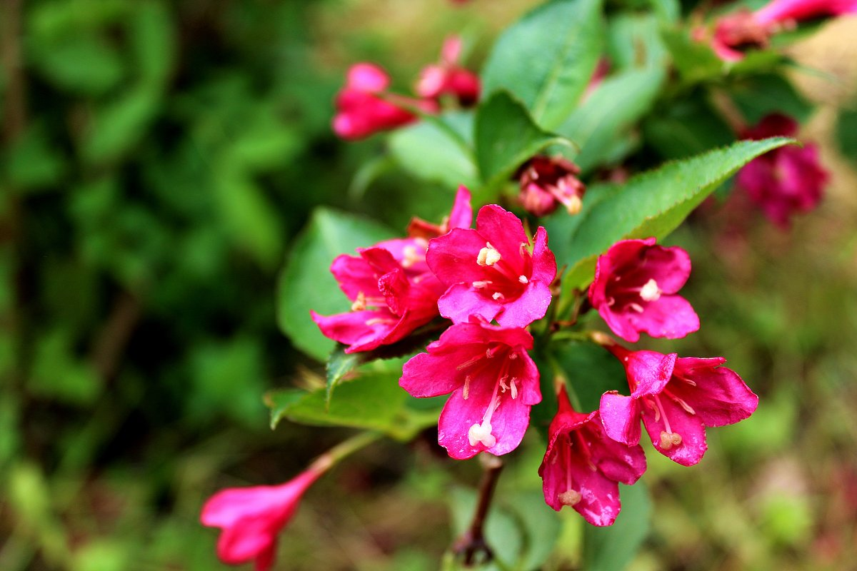 Цветы - Антонина Гугаева