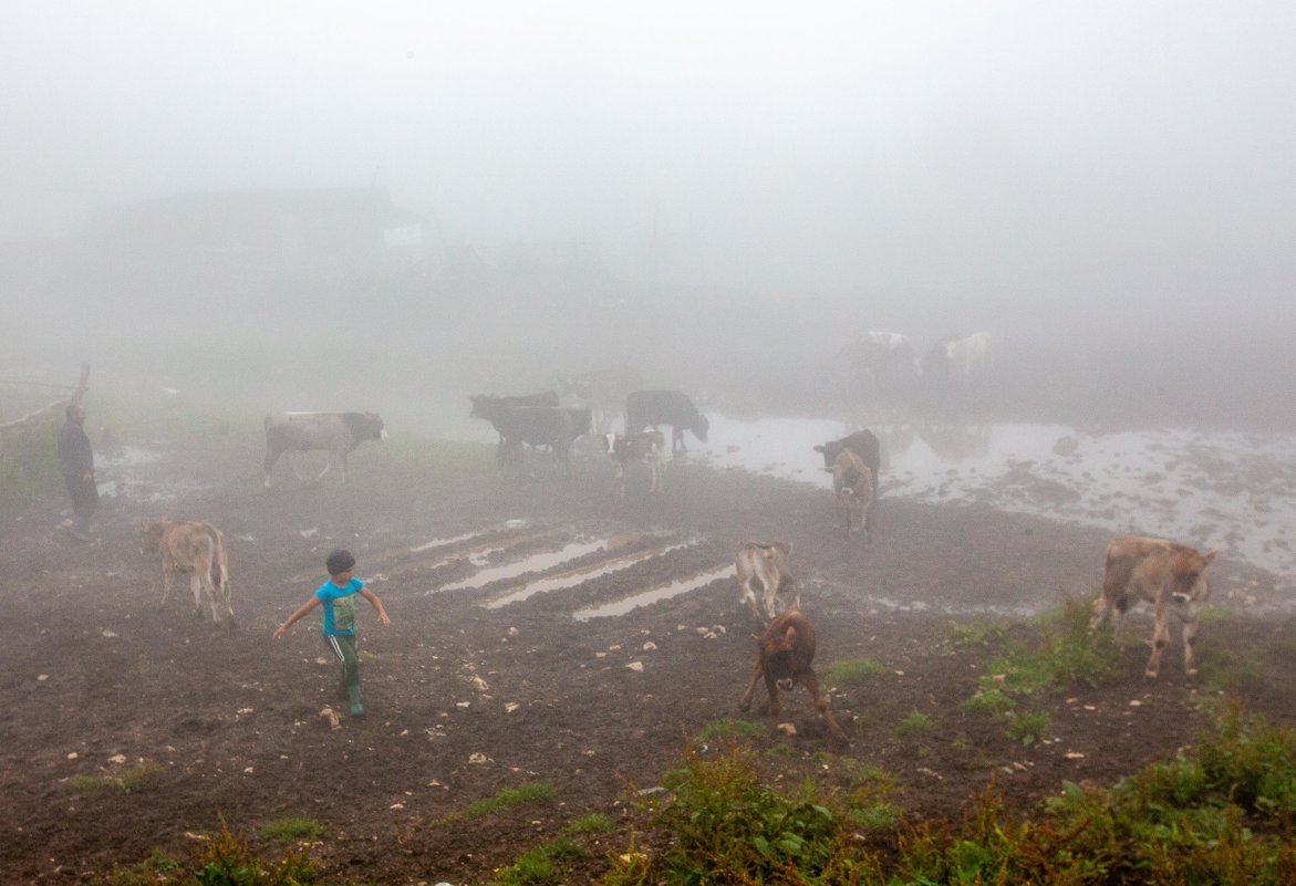 В тумане - Геннадий Мельников