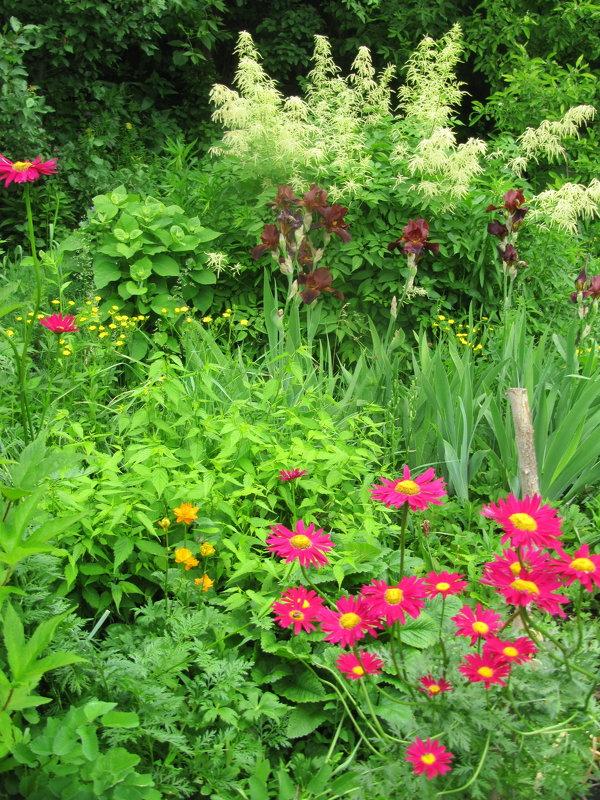 Июньское разноцветье сада - Антонина Балабанова