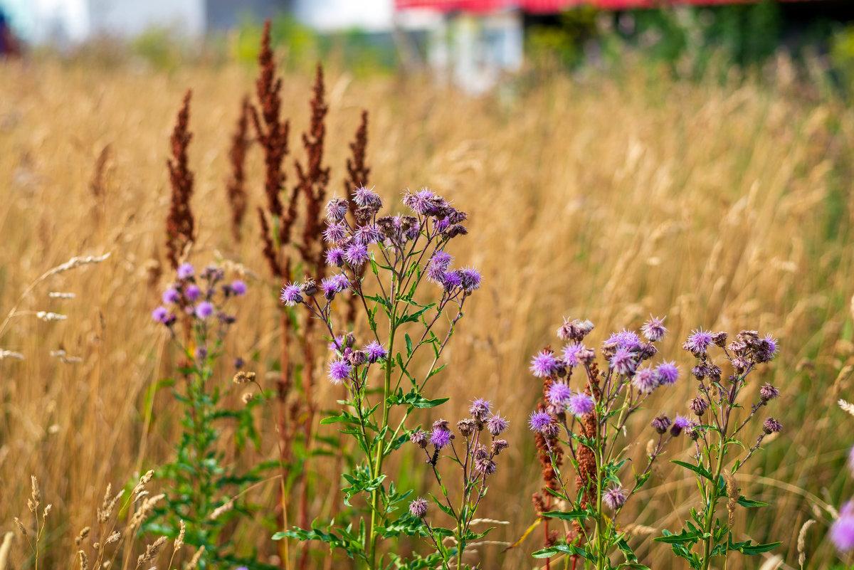 Трогательная красота простых полевых растений. - Виктор Орехов