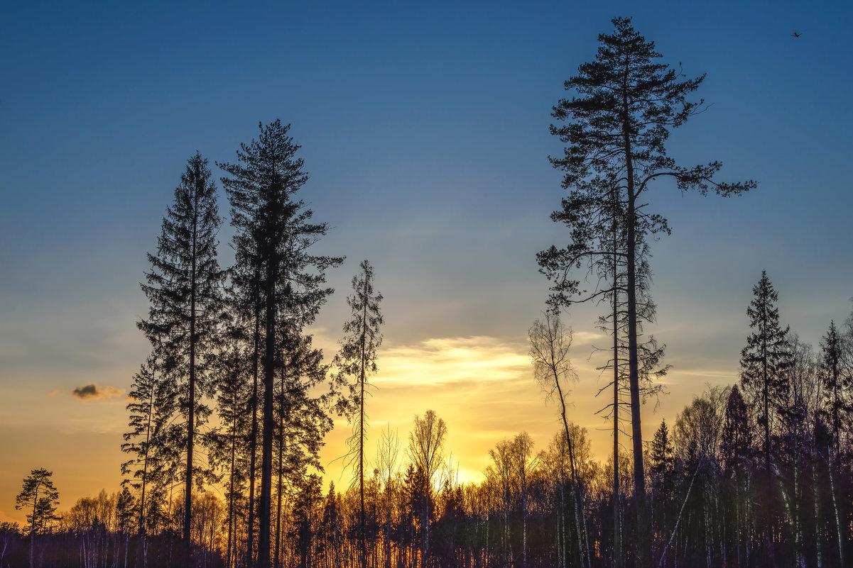 Вечернее небо - Александр Попович