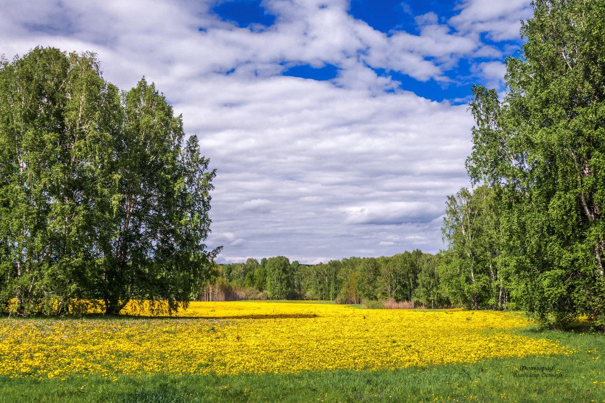 Жёлтый ковёр... - Владимир Деньгуб