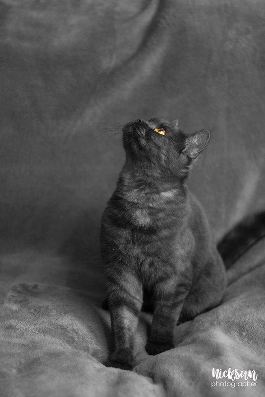 Katze - Nick Sun