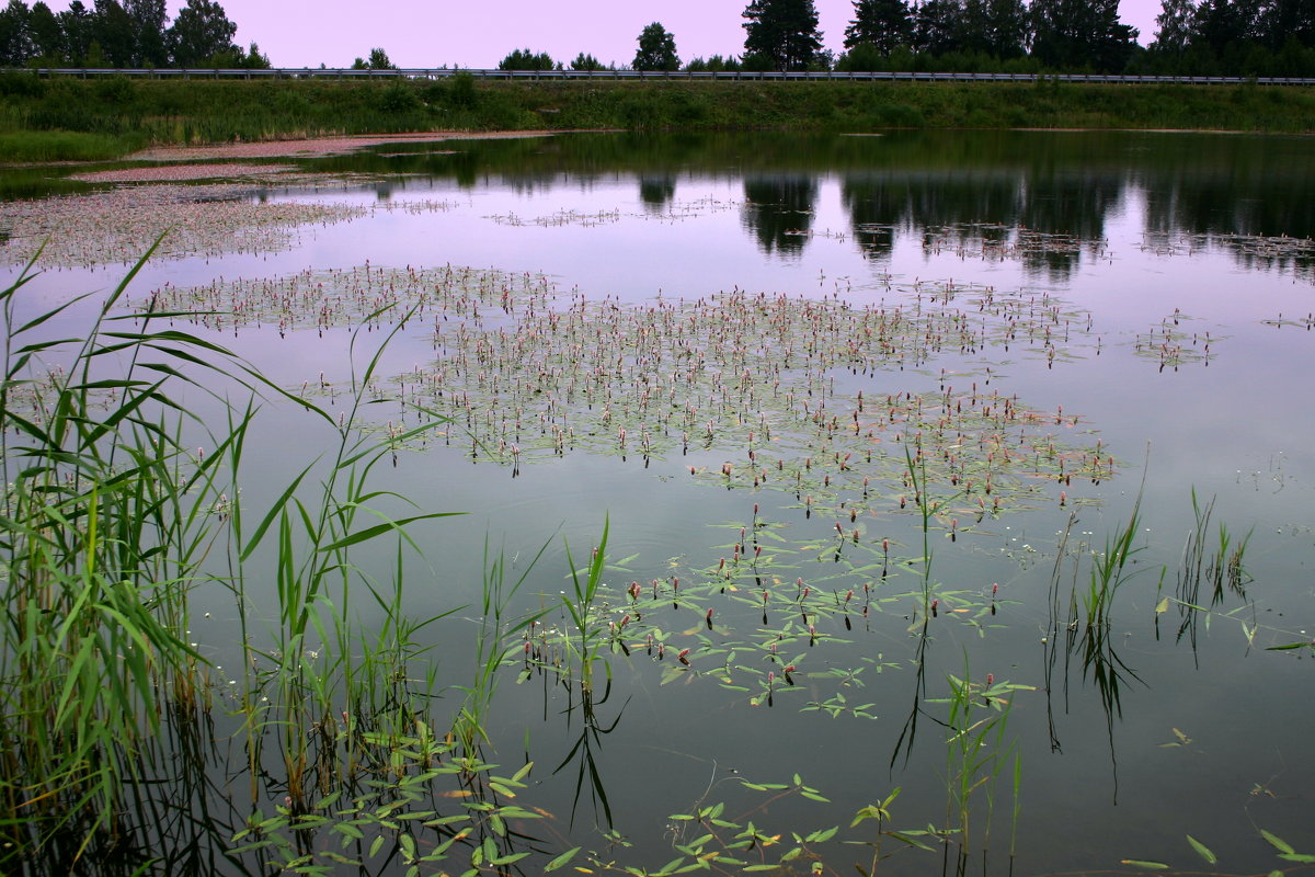 Гладь озера в июльских кружевах...