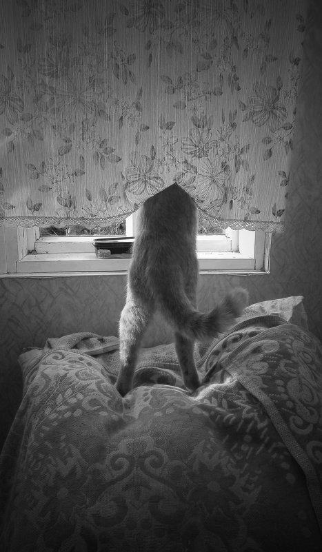 мыши под наблюдением (фото Н.Макельской) - Павел Самарович