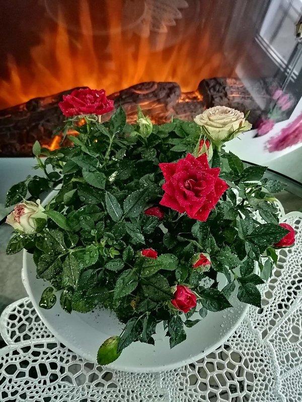 Розы - ОКСАНА ШВЕЦ
