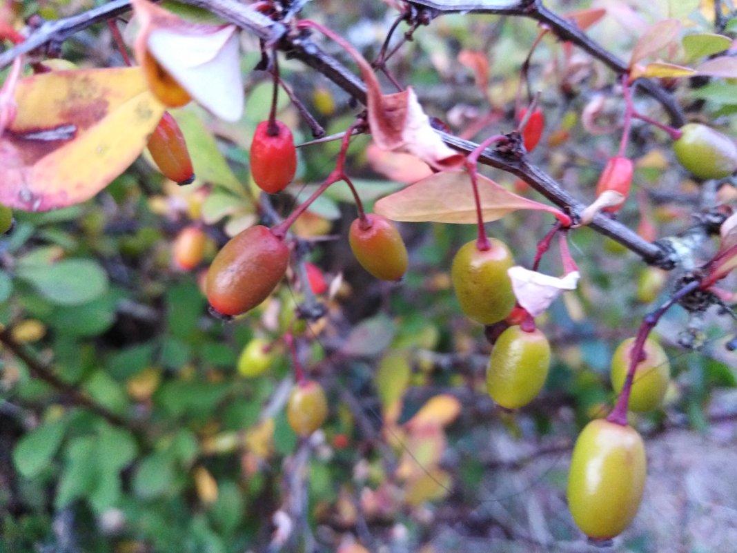 Плоды лета - Maryana Petrova