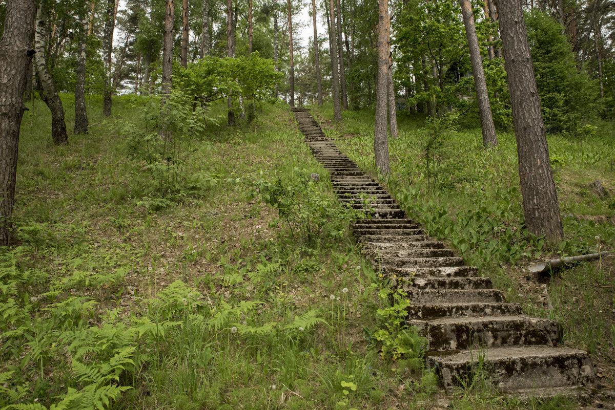 Каменная лестница - Андрей Резюкин