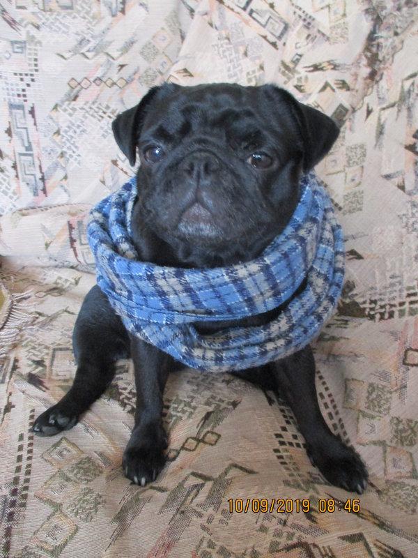 Моя Моника в шарфе. - Зинаида