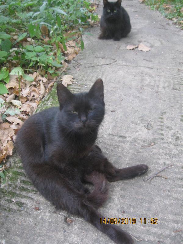 коты - Maikl Smit