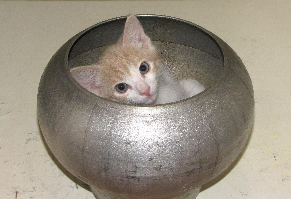 Кот в чугунке - Николай