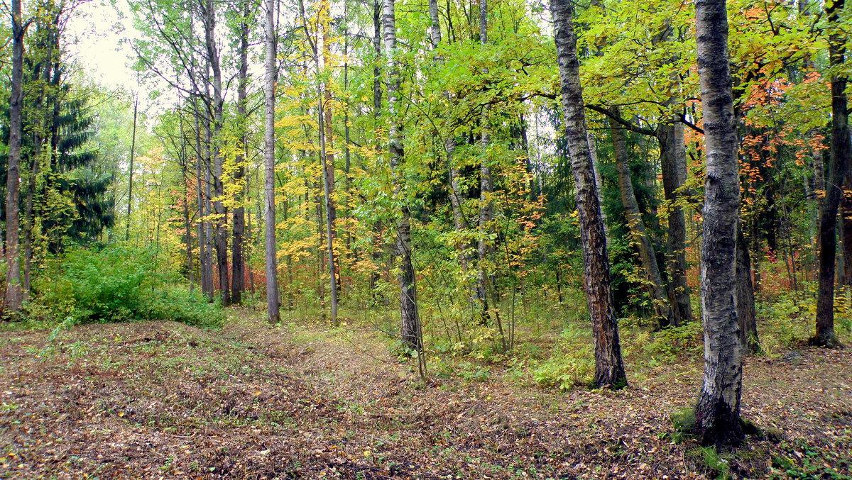 Осенний пасмурный день в Ал. парке ЦС - 3 - Сергей