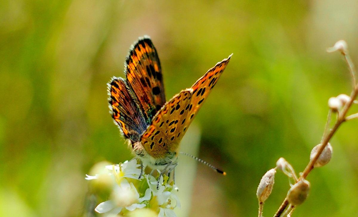 опять про бабочек...3 - Александр Прокудин