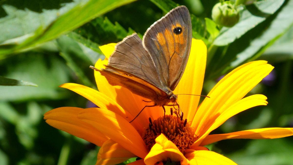 опять про бабочек...4 - Александр Прокудин