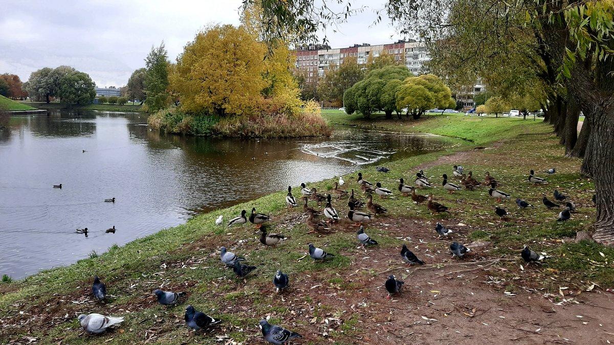 В парке Малиновка - Елена Павлова (Смолова)