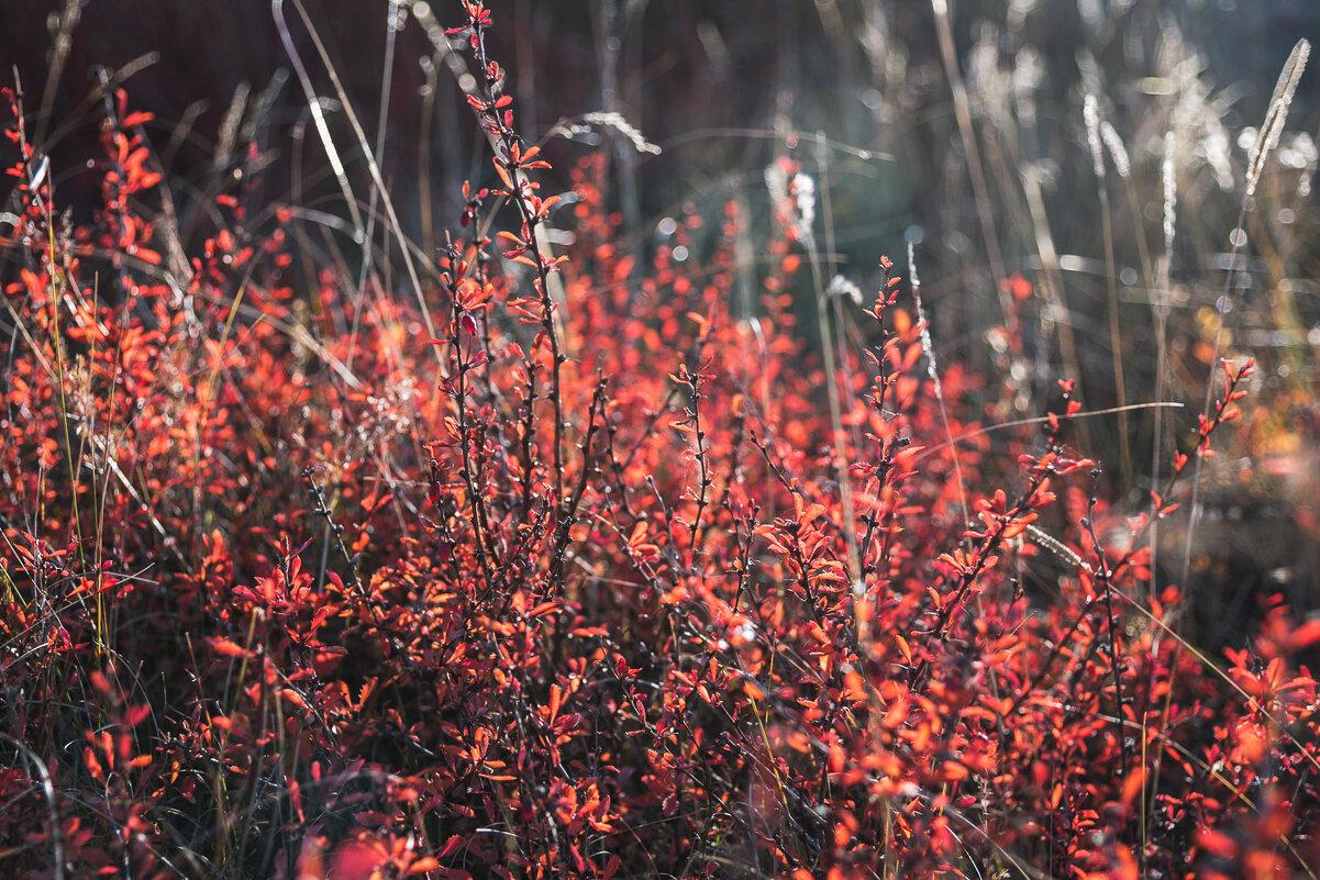 Осенний пожар - Ирина