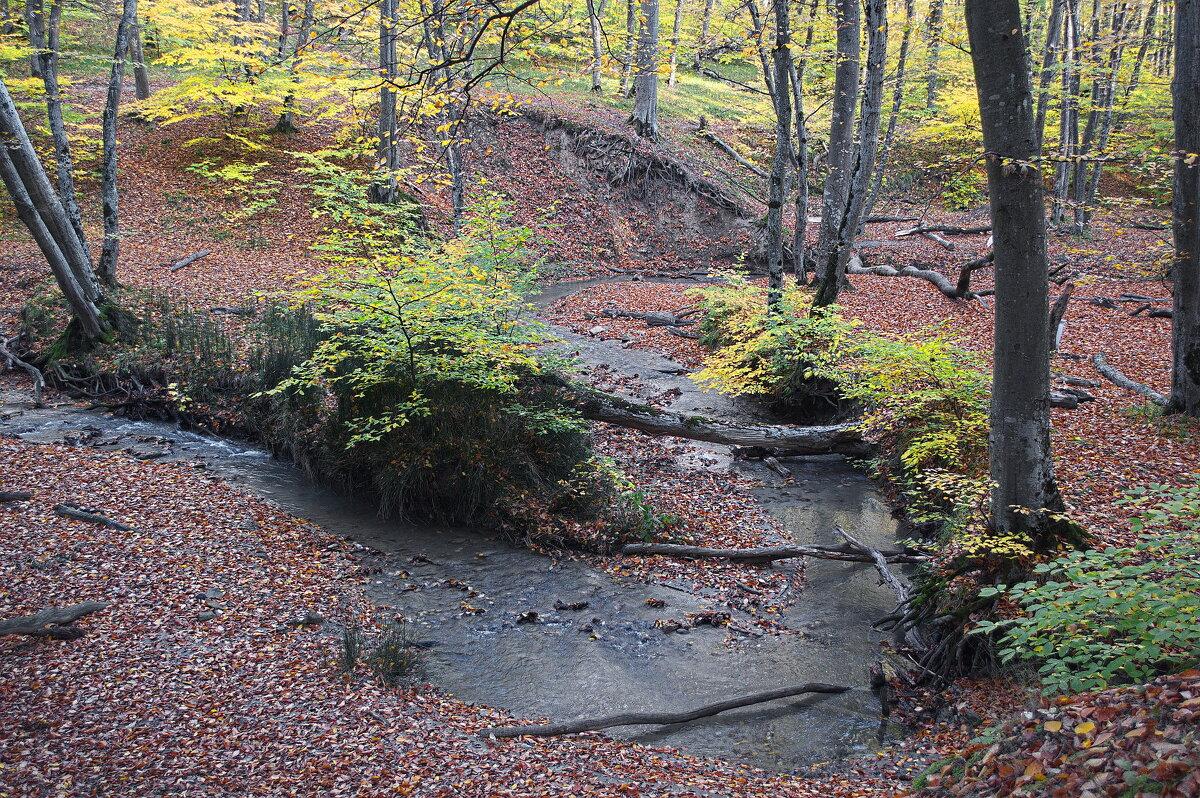 Осенний лес. - Vladimir Lisunov