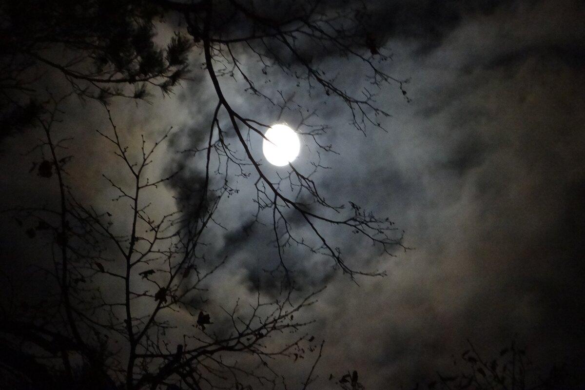 Ночное светило - Юрий Владимирович 34