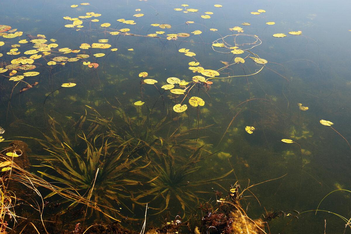 Цветы под водой - Наталья Цветкова