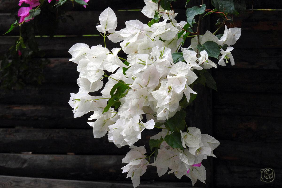 цветы на стене - Юрий Словецкий