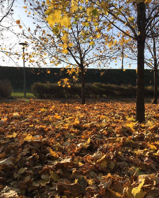 Опавшие листья ... - Лариса Корж
