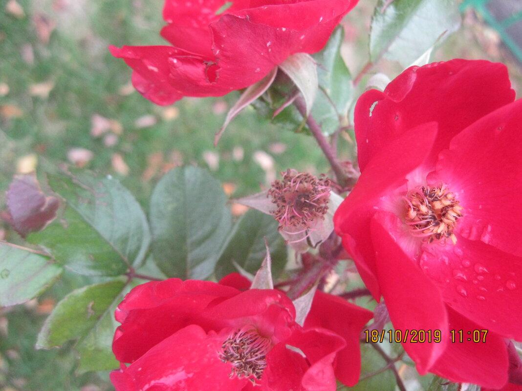 Цветы - Maikl Smit