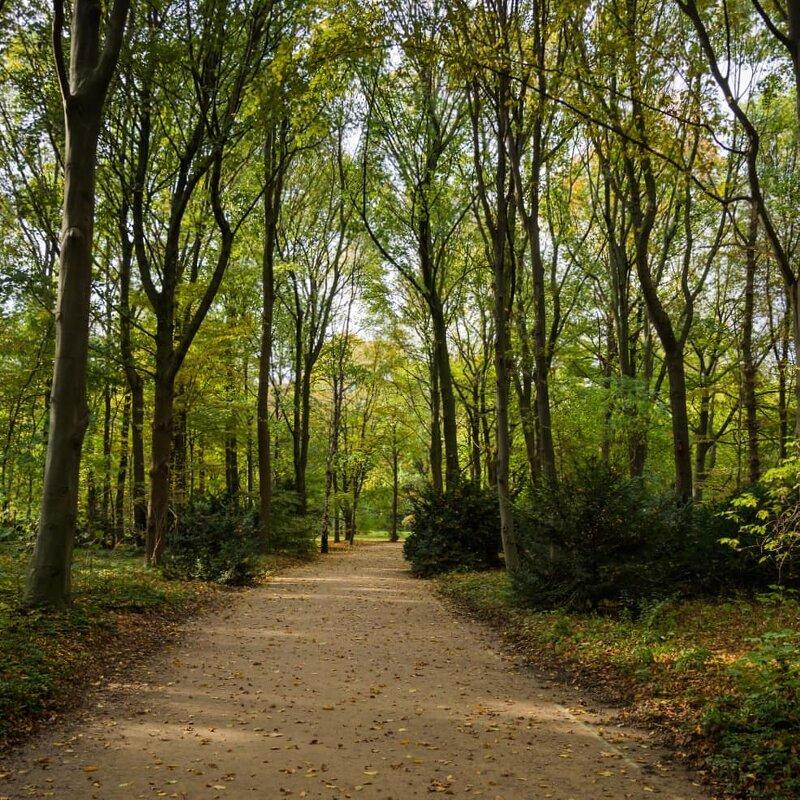 Где-то в парке Тиргартене... - Екатерина Харитонова