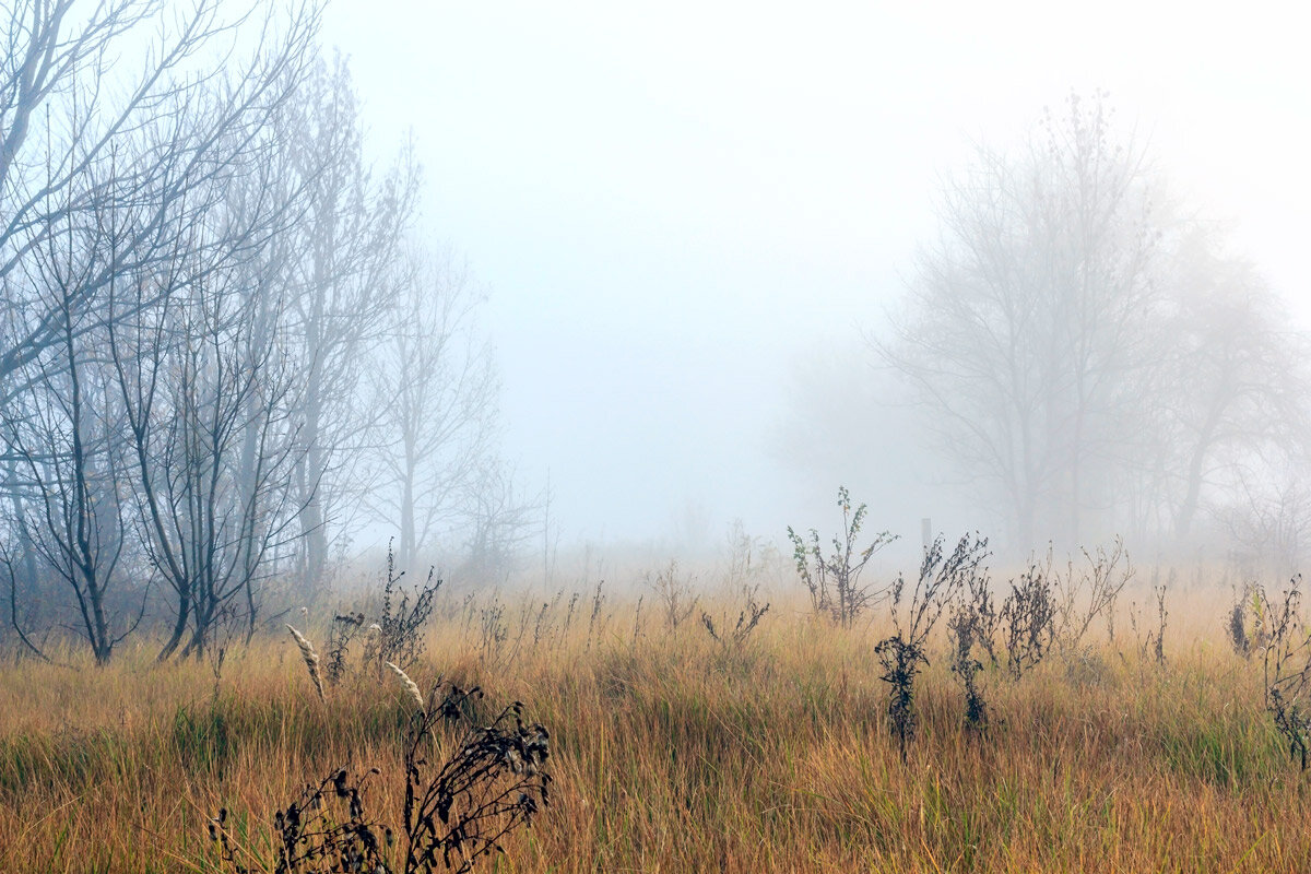 В тумане моря... - Юрий Стародубцев