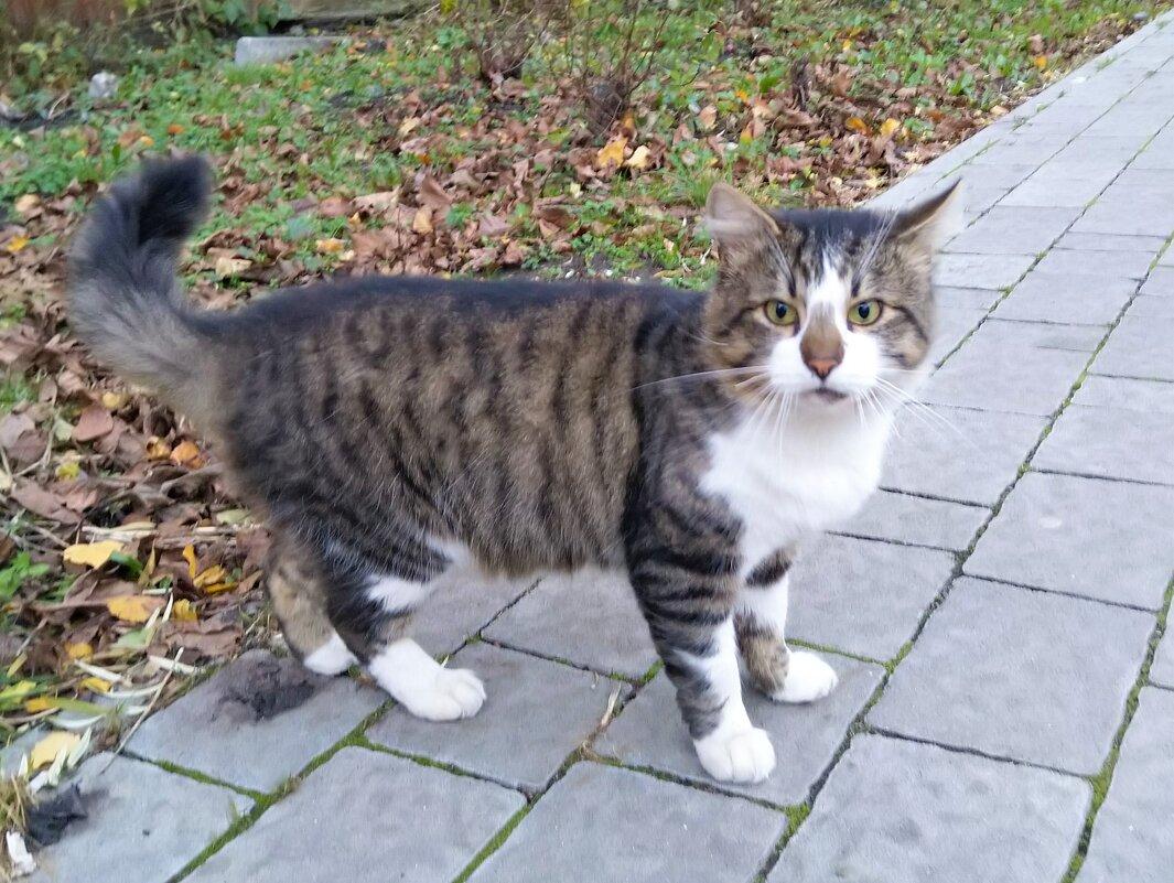 Просто кот на улице... - Marina Pr. **