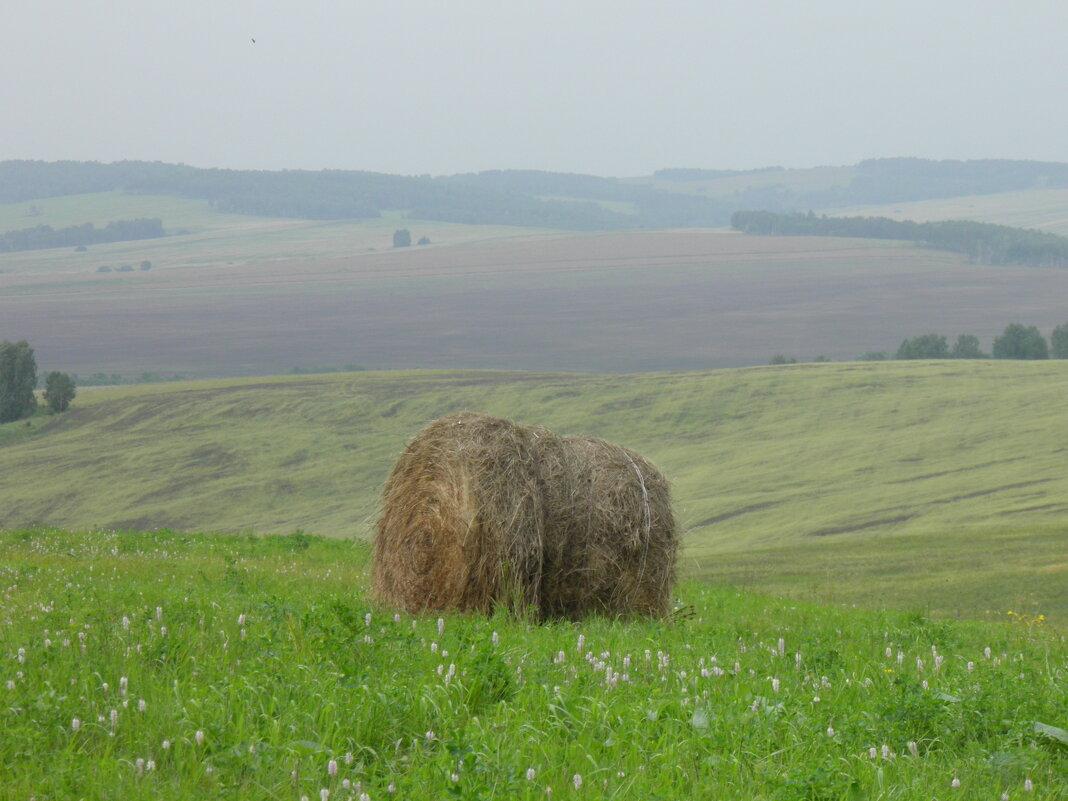 Сельская пастораль - Ольга Живица
