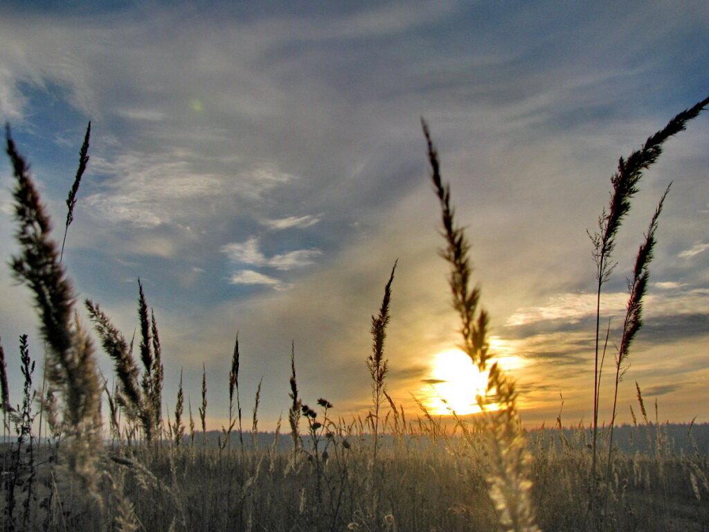 Осенняя трава - Лара Симонова