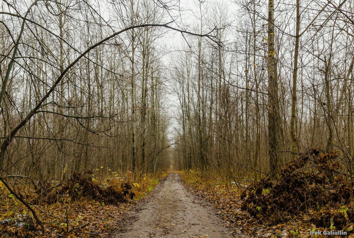 Лес в октябре - Ирек Галиуллин