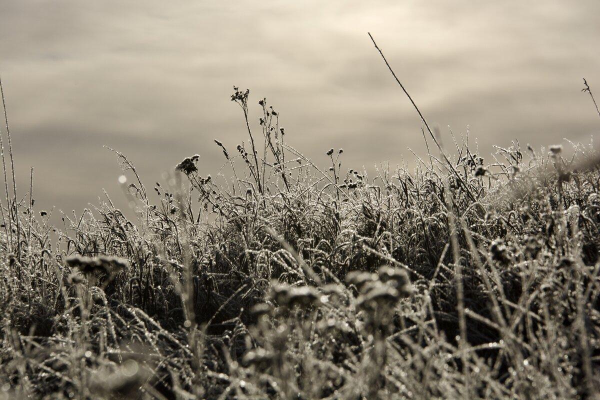 Морозное утро - Руслан