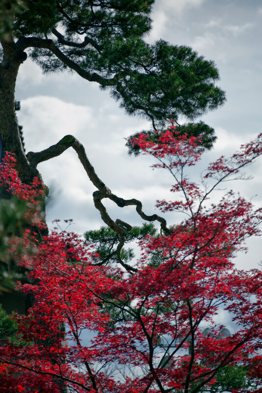 Японский дзен - slavado